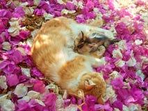 猫护理 免版税库存图片