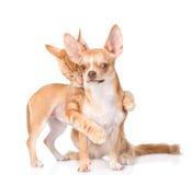 猫拥抱和叮咬小狗 在空白背景 免版税库存照片