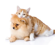 猫拥抱狗 查看照相机 隔绝在白色backgr 免版税库存图片
