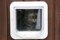 猫挡水板 图库摄影