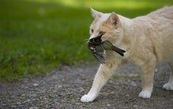 猫捉住了一只鸟 库存图片