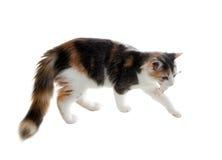 猫捉住了老鼠和熊玩具 免版税库存图片