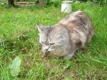 猫捉住了老鼠 免版税库存图片