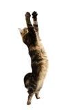猫捉住 免版税库存照片