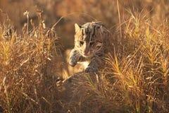 猫捕鱼希腊海岛samos 免版税库存图片