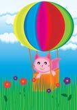 猫探险家 免版税图库摄影