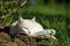 猫接近的白色 库存图片