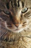 猫接近面朝上 免版税库存图片