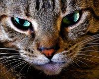 猫接近 免版税库存照片