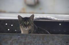 猫掩藏了在汽车的敞篷下 免版税库存图片
