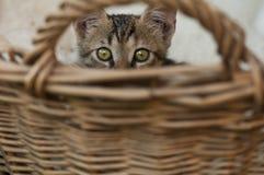 猫掩藏 免版税库存照片