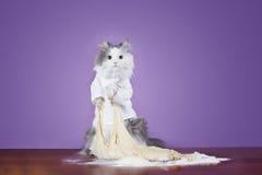 猫揉在衣服厨师的面团 免版税库存图片