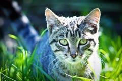 猫搜索 免版税库存图片