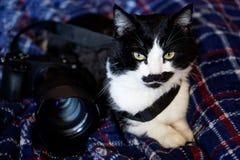 猫摄影师 在蓝色格子花呢披肩的可爱的猫在数字式c旁边 库存照片