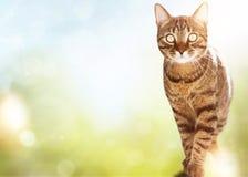 猫摆在-在夏天背景 图库摄影