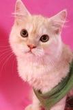 猫摆在 免版税库存图片