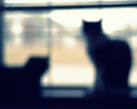 猫摘要 免版税库存照片