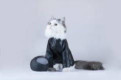 猫摩托车 库存照片