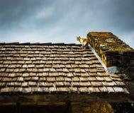 猫攀登震动木瓦屋顶 库存照片