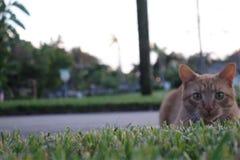 猫放下 免版税库存图片