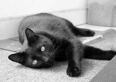 猫放松了 免版税库存图片