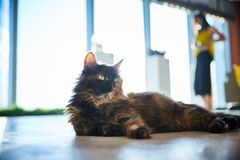 猫放松在穿戴的女孩中的地板上说谎 图库摄影