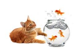 猫放松的注意 免版税库存照片