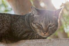 猫放松 库存照片