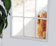 猫敲门人 免版税图库摄影