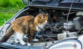 猫旅客看 免版税库存图片