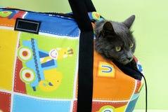 猫旅行 免版税库存图片