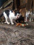 猫无家可归者 免版税图库摄影