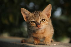 猫日出 免版税库存照片
