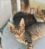猫日图画爱理想的华伦泰 免版税库存照片
