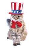 猫日总统 免版税库存图片