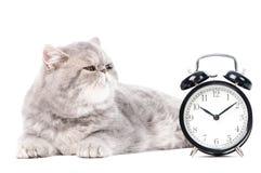 猫时钟异乎寻常的灰色全部赌注 免版税库存图片