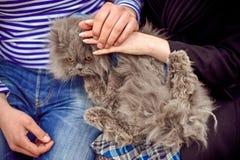 猫是在男人和妇女的手里 免版税库存图片