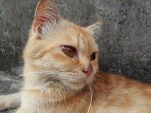 猫是懒惰的 免版税库存照片