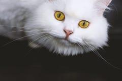 猫是独立和分隔的 免版税库存图片