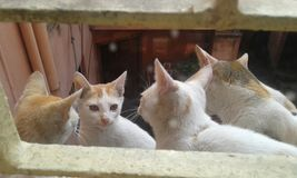 猫是繁忙的一起谈论 库存照片