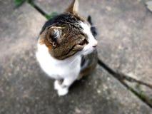 猫是美丽的 免版税库存照片