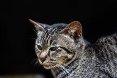 猫是非常老由窗口放松 库存图片