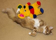 猫是说谎的舒展在米黄地毯 免版税库存照片