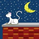 猫晚上满天星斗的白色 免版税库存照片