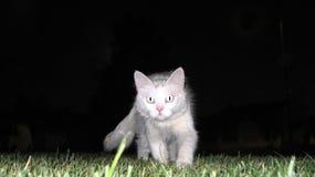 猫晚上白色 库存照片