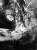 猫景色 免版税图库摄影