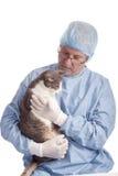 猫暹罗兽医 库存图片