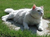 猫有篷货车 免版税图库摄影