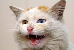 猫有篷货车 库存图片