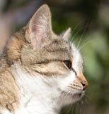 猫本质上 免版税图库摄影